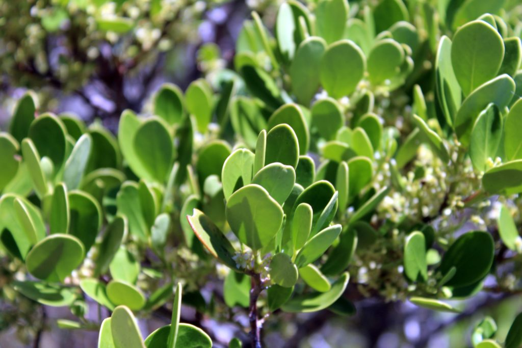 Pflanzen am Cape Point