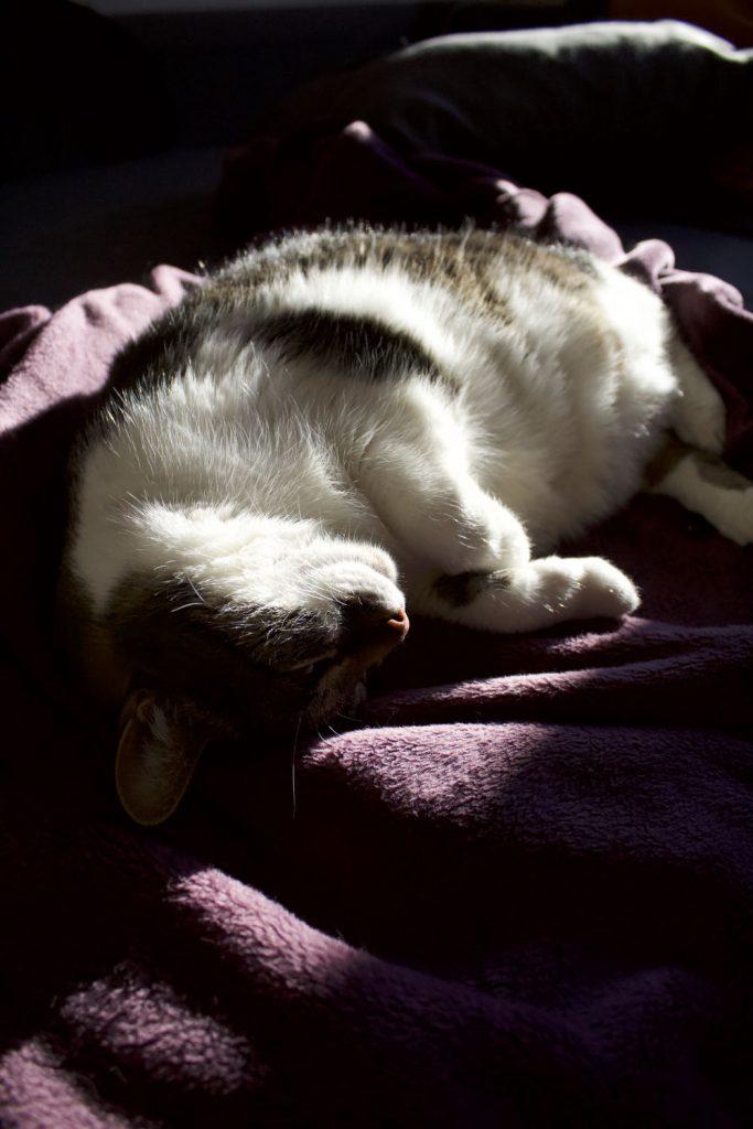Pythons Lieblingsbeschäftigung: Schlafen